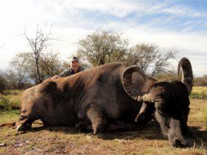 Water Buffalo Hunting Argentina
