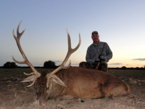 Red Stag Hunts Argentina