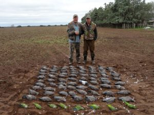 Pigeon Hunting Argentina